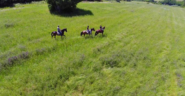 Agriturismo Valle Verde - Cavalli - Horses