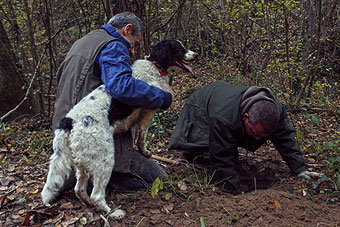 Agriturismo Valle Verde - Ricerca Del Tartufo -  Truffle Hunting